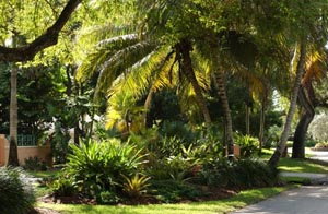 landscape landscaping lawn and garden service ft lauderdale broward county ft lauderdale